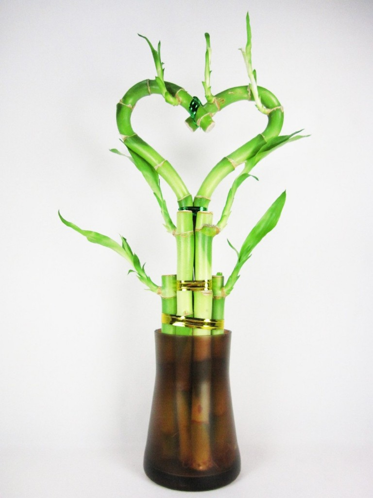 heart shaped lucky bamboo