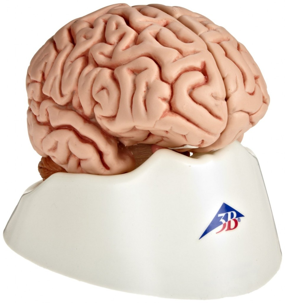 Classic Brain Model
