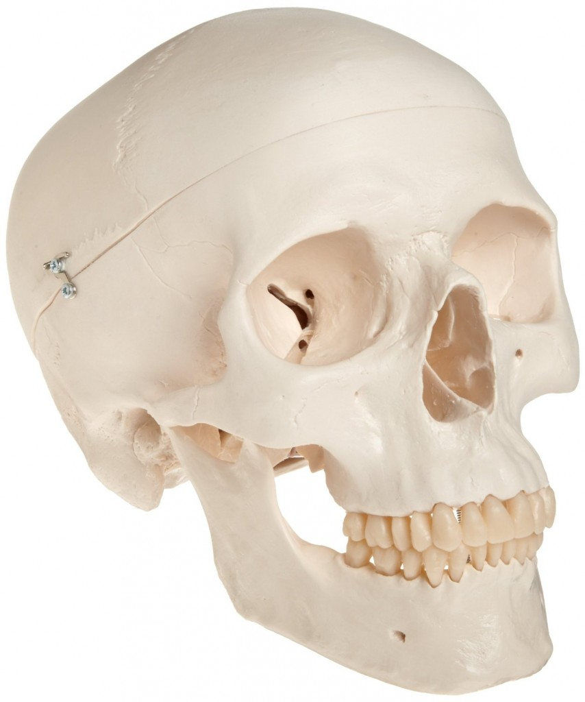 cool gifts for medical students classic skull model