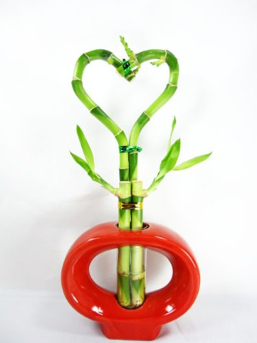 Cute Heart Shape Lucky Bamboo