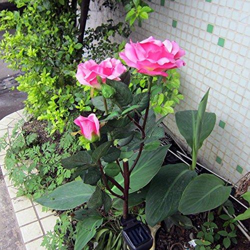 Solar Powered Roses