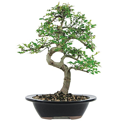 Cute Bonsai Tree
